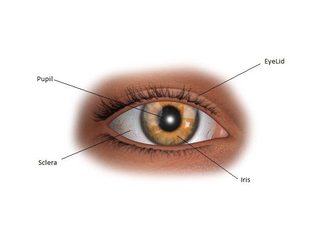 eye1a